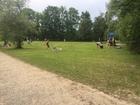 Große Liegewiese mit Beachvolleyball und Spielplatz